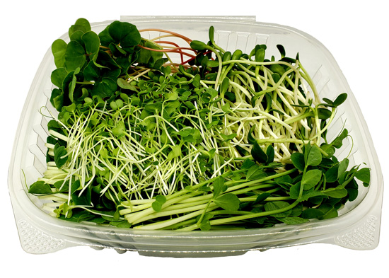 microgreen non-spicy salad mix