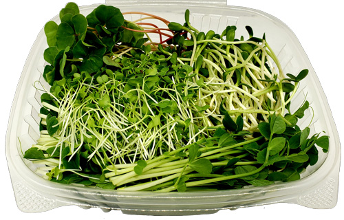 microgreen non spicy mix with lid open