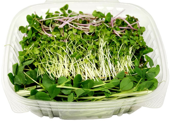 microgreen spicy salad mix